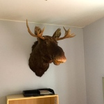 Hostel Vandrerhjem - moose head