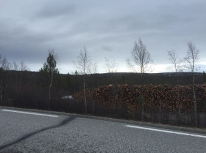 Log piles by the roadside