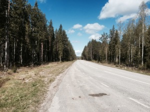 Swedish road through the forest, not uncommon
