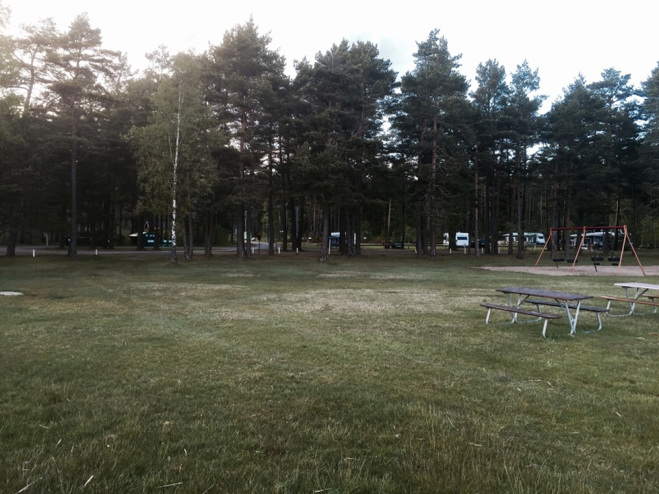 Pine forest camping area
