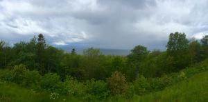 Verdant flora alongside Lake Vattern