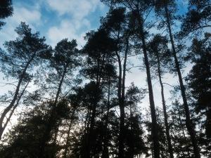 Listening to the trees in Varnamo