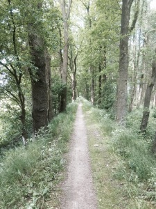 Forest path on way to Meppen - keeping an eye out for tree root ambushes (and Orcs)