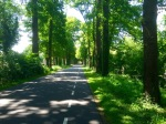 More quiet cycle routes through shaded woodland