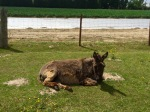 Donkey enjoying the sunshine