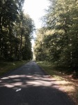 More shaded lanes - Foret de Compiegne
