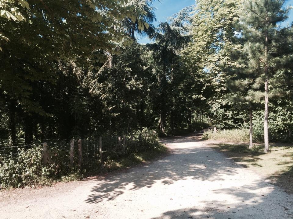 Bois du Bologne