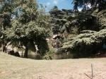 Bois du Bologne 2