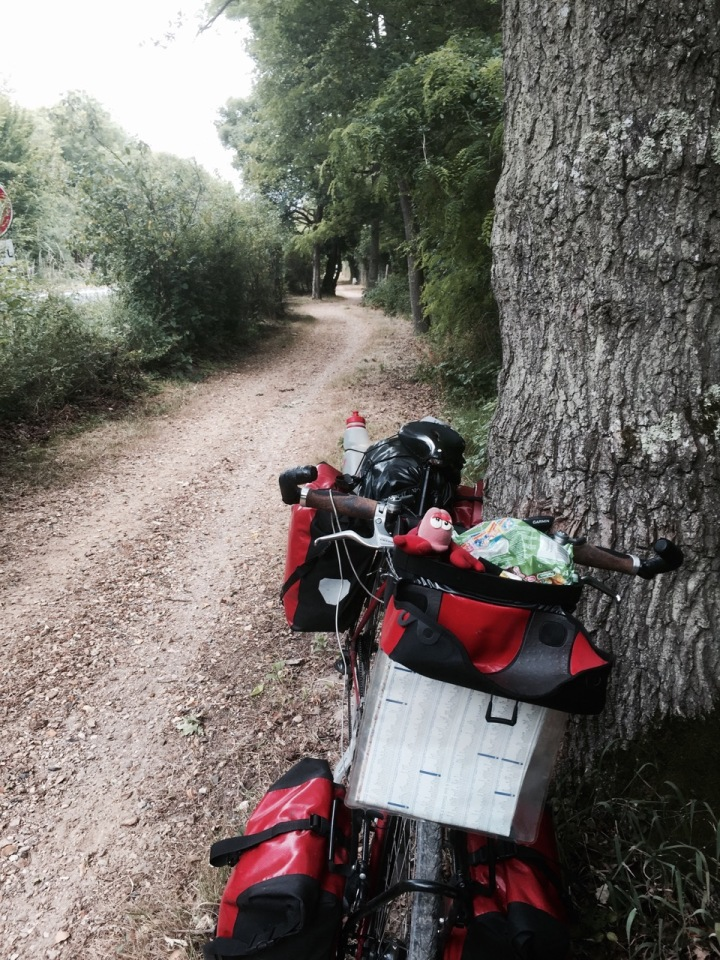 Last stretch along a cycle path to Fontainebleau