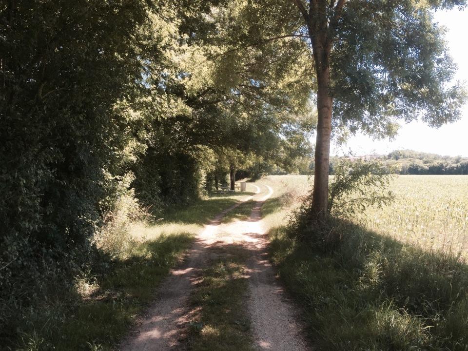 Cycle path alongside Charente