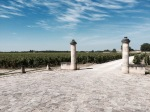 Medoc vineyards
