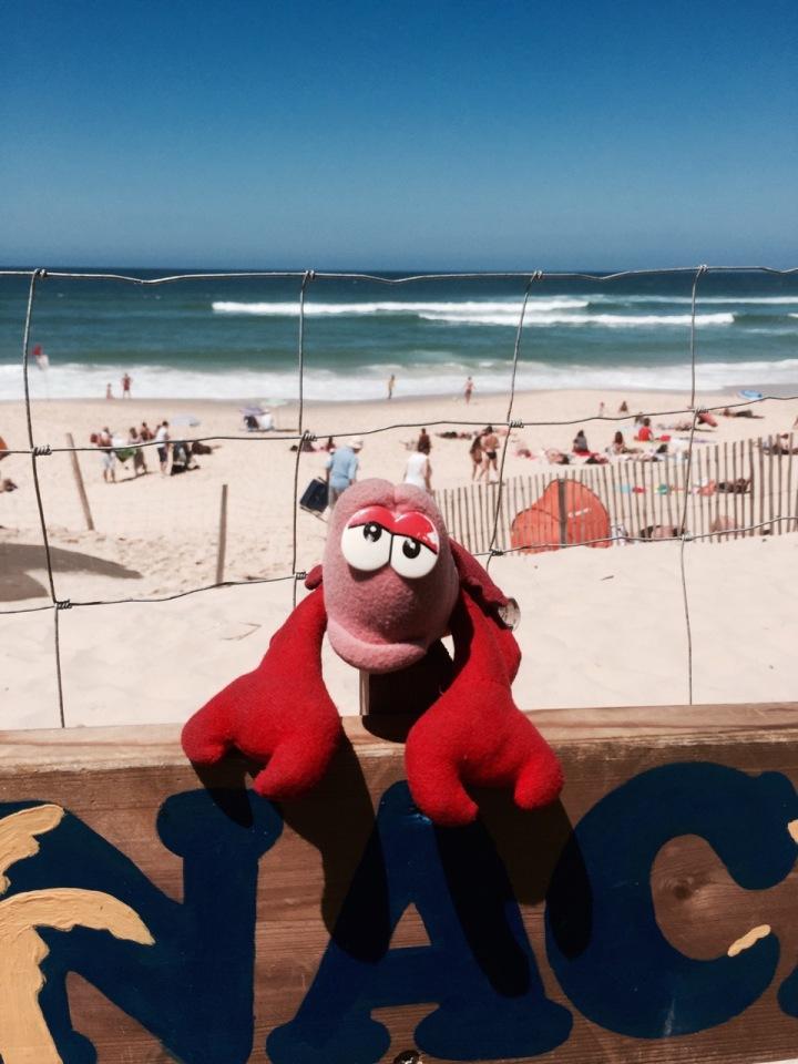 Lobster enjoying the beach