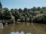 Lunch break pond - lots of fish