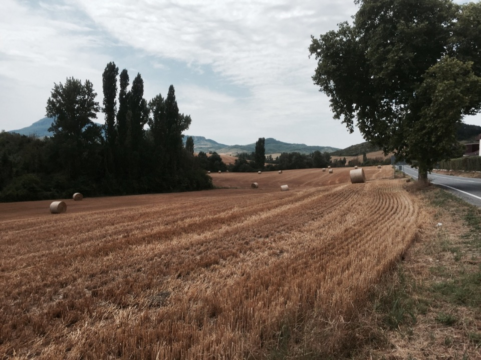 Picture postcard view of corn field