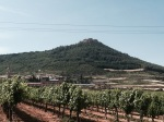 Grapevines and castle on hill 2