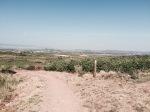 Rioja grapevines, Aleson