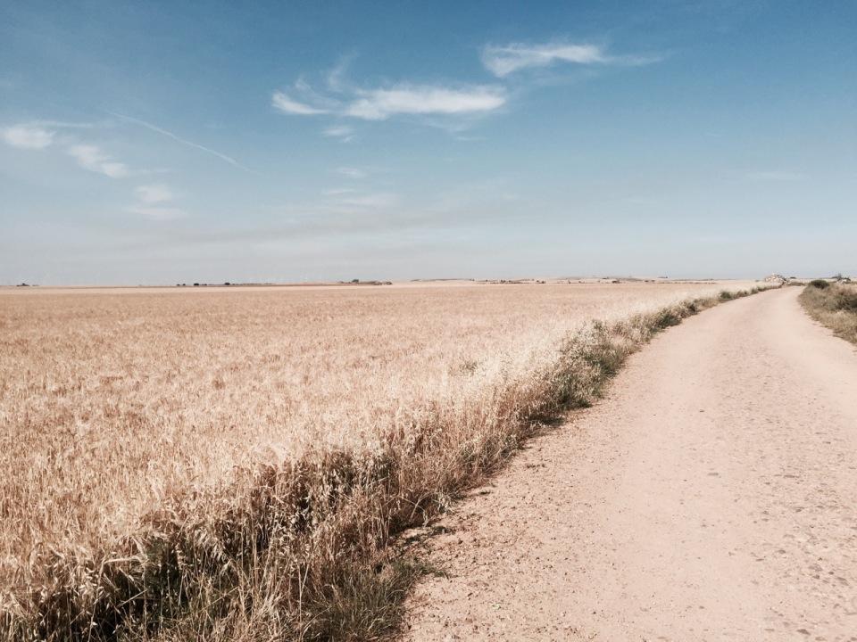 Riding through fields upon fields of corn
