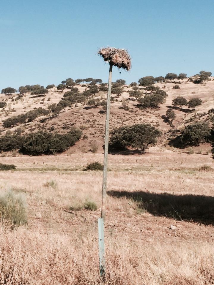 Stork's next on a pole