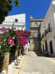 Beautiful blooms, in Tarifa old town
