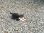 Hungry campsite cat