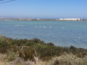 Flamingos in on the flats near Santa Pola