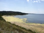 Yellow algal blooms on lakes near Leucate