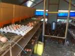 Egg collecting time; Le Champ de la Riviere