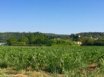 Looking towards Salavas, lots of grapevines
