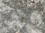 Some kind of hornet type varmint in Le Pradet