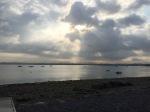 Morning Lake Garda - swans feeding