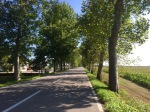 Tree lined road East providing shade on way to Trieste