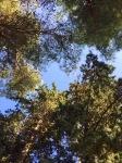 View from hammock, Rozak camping, Trogir