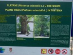 Sign explaining Plane Trees