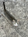 Campsite cat saying hello, Camping Avala, Budva