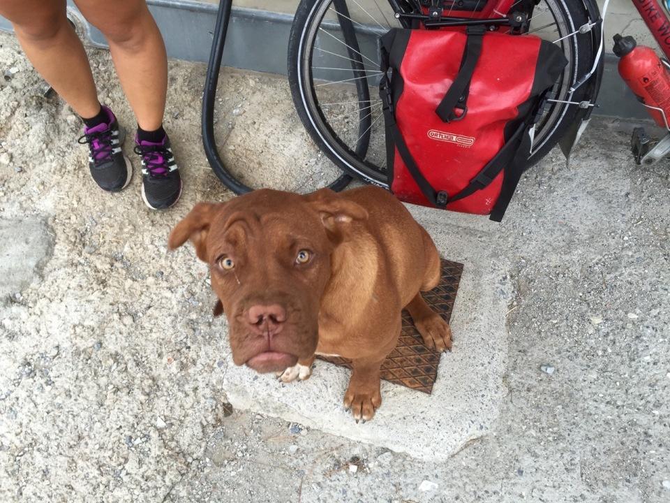 Friendly garage puppy