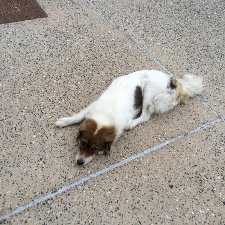 A friendly dog, Thessaloniki