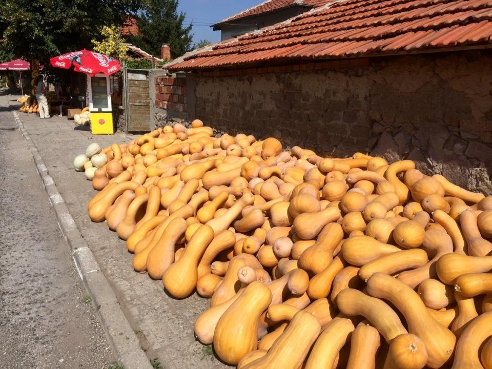 A huge pile of squashes for sale in Gorski izvor, Haskovo