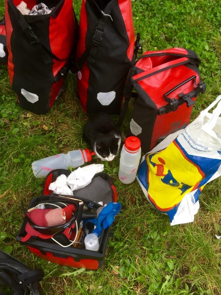 Campsite cat hiding amongst my panniers