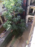View down into the building courtyard from Unity hostel