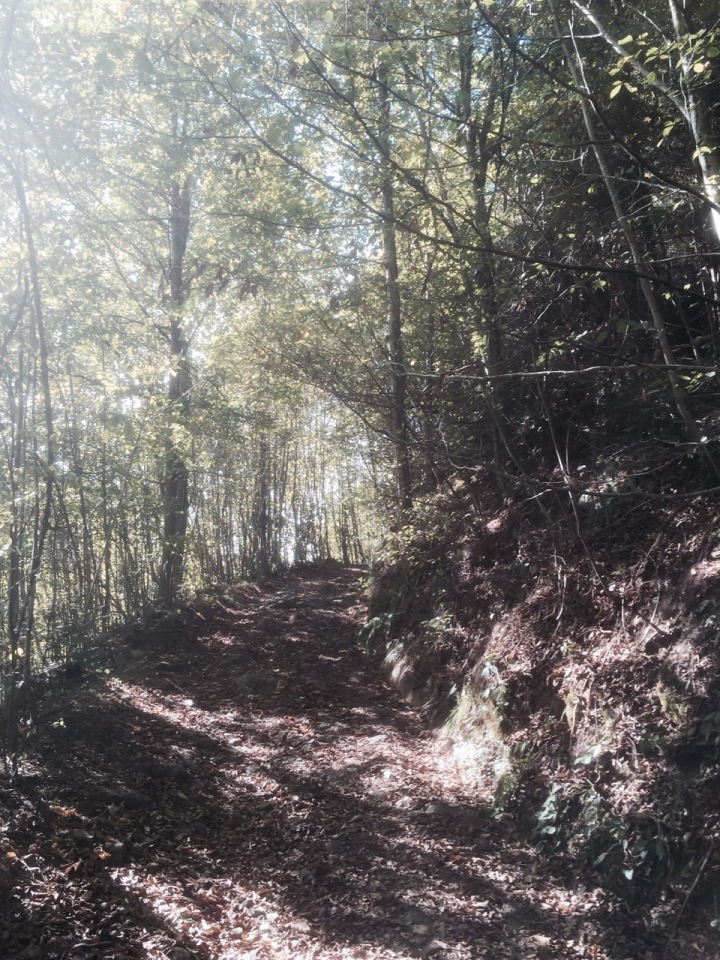 Trail continues up, bit wider now