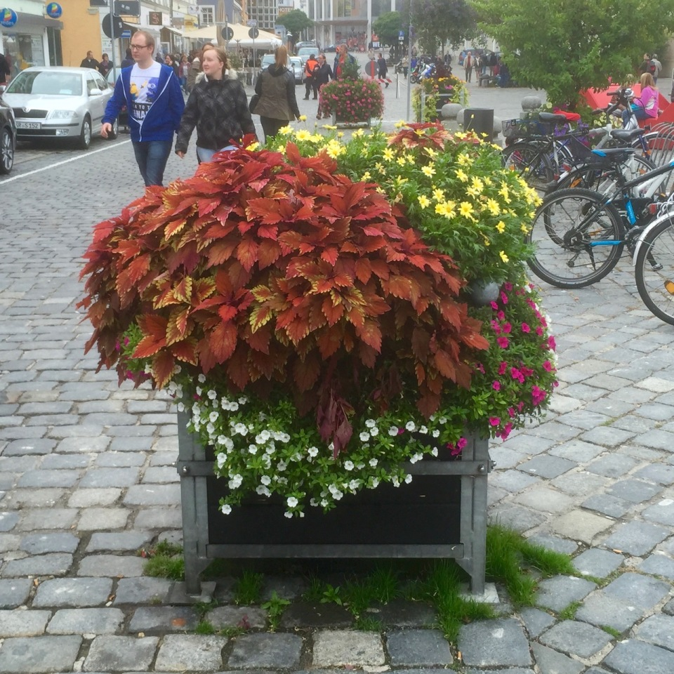 Straubing - flower box