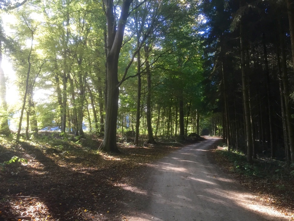 Trail leads through more forest on the way to Donauworth
