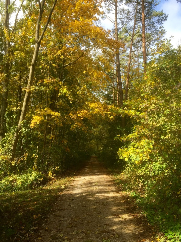 Trees starting to look autumnal; trail going through forest