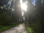 And finally some forest to cycle through