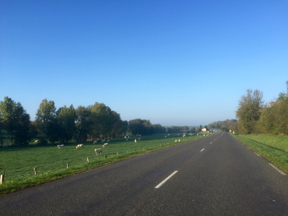 Cows for company on the way to Reims