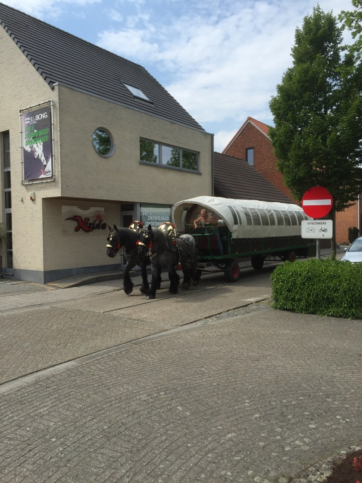 Carriage being drawn by shire horses (or equivalent) in Belgium