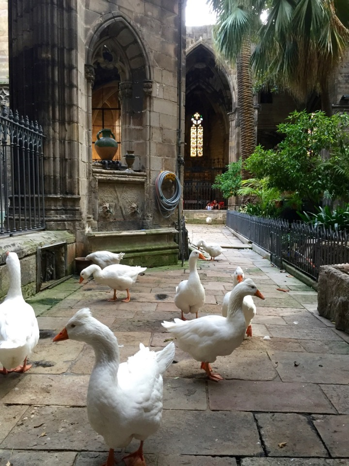 An unexpected find; geese in the Cathedral in Barcelona