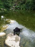 My friend Christophe's farm dog, Tina, who likes swimming a lot