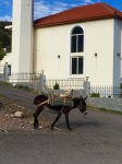 Donkey working in Albania; it was running away from its owner