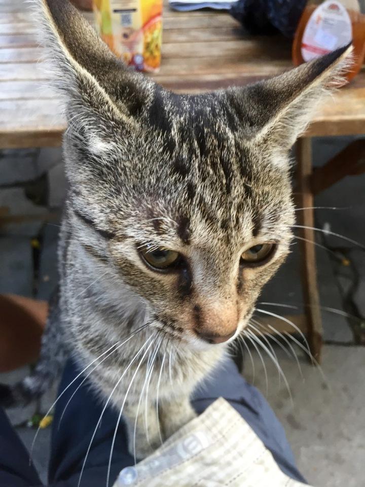 Kitten in Plovdiv, Bulgaria